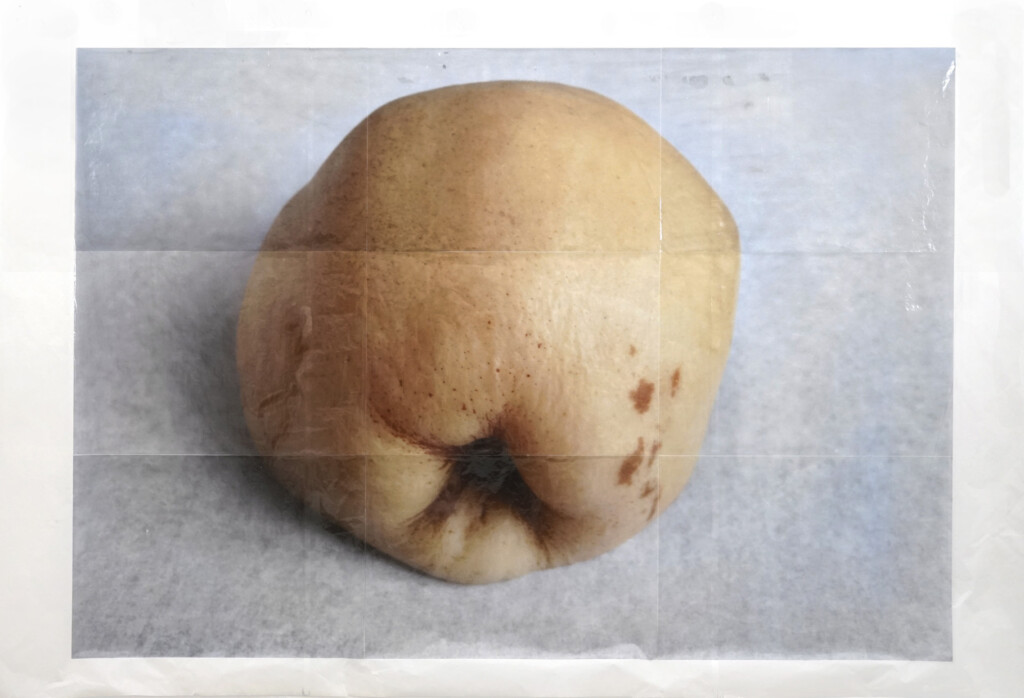Martin Walde, steamed_Quince_2018